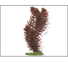 Rastlina Foxtail 20 cm 1ks VÝPREDAJ
