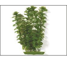 Rastlina Ambulia 30 cm 1ks