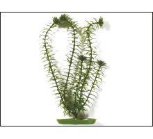 Rastlina Anacharis 13 cm 1ks