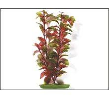Rastlina Red Ludwigia 30 cm 1ks