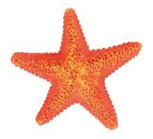Farebné dekoratívne hviezdice 1ks