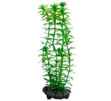 Rastlina TETRA Anacharis S