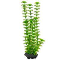 Rastlina TETRA Ambulia M