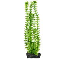 Rastlina TETRA Ambulia L