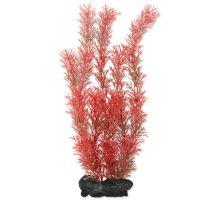 Rastlina TETRA Foxtail Red L